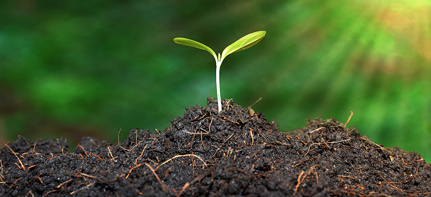 Is your soil up to the challenge?