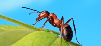 Ant philosophy - A mental model to live a good life